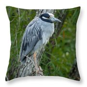 Yellow-crowned Night Heron 4 Throw Pillow