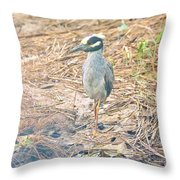 Yellow Crowned Night Heron Along The Tidal Creek Throw Pillow
