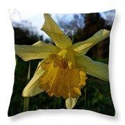 Yellow Daffodils 5 Throw Pillow