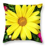 Yellow Daisies Throw Pillow