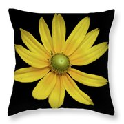 Yellow Eyed Daisy In Black Throw Pillow