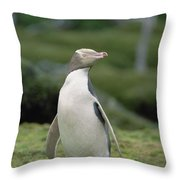 Yellow-eyed Penguin Albino Throw Pillow