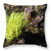 Yellow Feather Star Throw Pillow