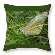 Yellow Fringed Sulphur Butterfly In Grass Blades  Image No 1  Indiana Throw Pillow