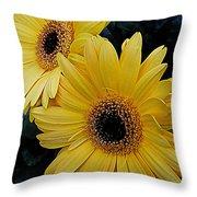 Yellow Gerbera Daisies Throw Pillow