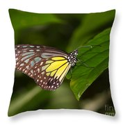 Yellow Glassy Tiger Butterfly Throw Pillow