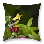 Yellow Goldfinch Throw Pillow