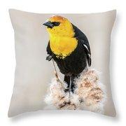 Yellow Headed Blackbird #4 Throw Pillow