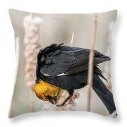 Yellow Headed Blackbird #7 Throw Pillow