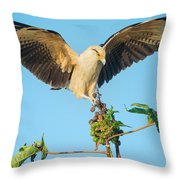 Yellow-headed Caracara Milvago Throw Pillow