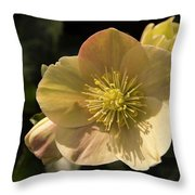 Yellow Helleborus Throw Pillow