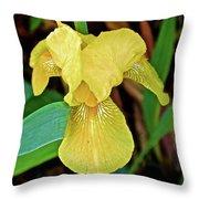 Yellow Iris At Pilgrim Place In Claremont-california Throw Pillow