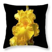 Yellow Iris Flower Still Life Throw Pillow