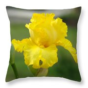 Yellow Iris Flowers Art Prints Cards Irises Summer Garden Landscape Throw Pillow