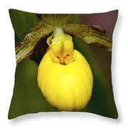 Yellow Lady's Slipper 3 Throw Pillow