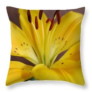 Yellow Lily 2 Throw Pillow