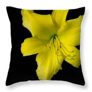 Yellow Lily Flower Black Background Throw Pillow