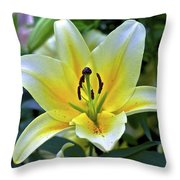 Yellow Lily Longwood Gardens Throw Pillow