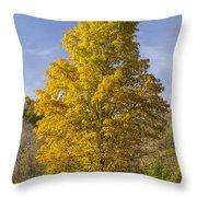 Yellow Maple Tree 1 Throw Pillow