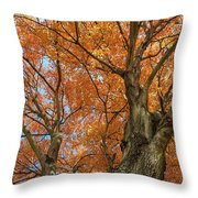 Yellow Maple Tree Throw Pillow