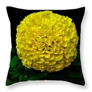 Yellow Marigold Flower On Black Background Throw Pillow
