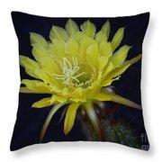 Yellow Night Blooming Cactus  Throw Pillow
