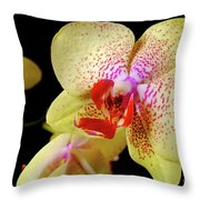 Yellow Phalaenopsis Orchid Throw Pillow