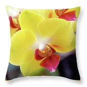 Yellow Phalaenopsis Orchids Throw Pillow