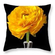Yellow Ranunculus In Striped Vase Throw Pillow