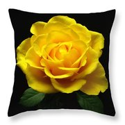 Yellow Rose 6 Throw Pillow