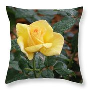 Yellow Rose In The Rain Throw Pillow