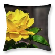 Yellow Rose Of Los Gatos Throw Pillow