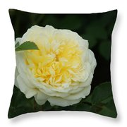 Yellow Rose Of Texas Too...   # Throw Pillow