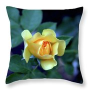 Yellow Rose With Purple Contrast 0357 H_2 Throw Pillow