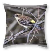Yellow-rumped Warber In Fall Colors Throw Pillow