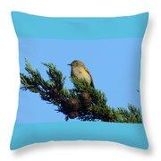 Yellow-rumped Warbler On Cedar Bough Throw Pillow