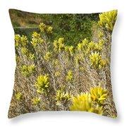 Yellow Sage Flower Throw Pillow