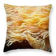 Yellow Sea Anemones Macro Throw Pillow