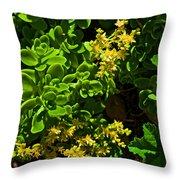 Yellow Sedum At Pilgrim Place In Claremont-california Throw Pillow