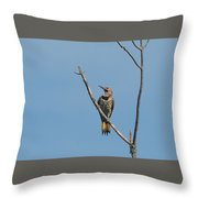 Yellow Shafted Flicker Front Throw Pillow