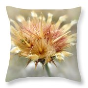 Yellow Star Thistle Throw Pillow