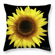 Yellow Sunflower Isolated On Black Background 8 Throw Pillow