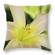 Yellow Tan Lily 1 Throw Pillow by Roger Snyder