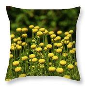 Yellow Tansy Throw Pillow