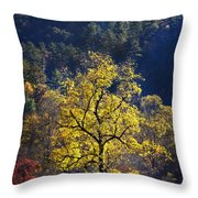 Yellow Tree In Sunlight Throw Pillow