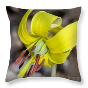 Yellow Trout Lily Throw Pillow