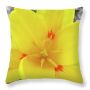 Yellow Tulip Flower Spring Flowers Floral Art Prints Throw Pillow