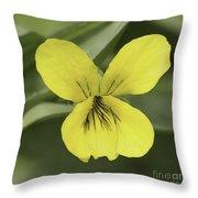 Yellow Wild Violet Throw Pillow