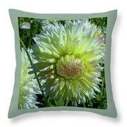 Yellow With White Dahlia Flower Throw Pillow