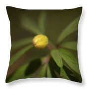 Yellow Wood Anemone 4 Throw Pillow